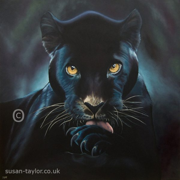 portrait of a black Jaguar, oil on canvas 1 metre square by Artist Susa Taylor