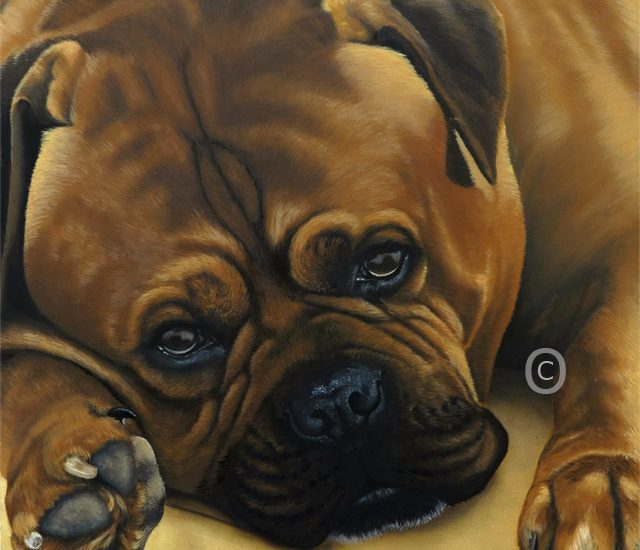 Harvey – Dogue De Bordeaux