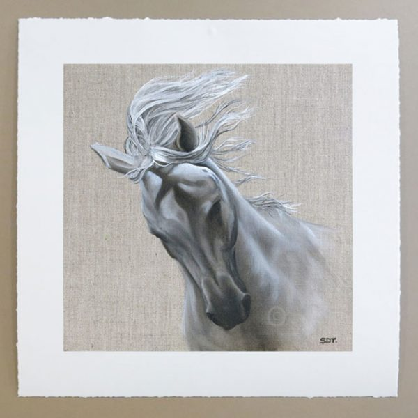 Andalusian grey horse portrait limited signed edition print by artist Susan Taylor