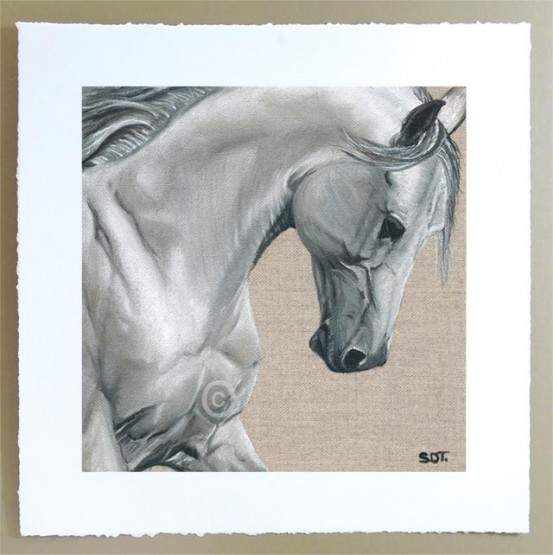 lipizzan horse portrait, limited edition signed print unframed
