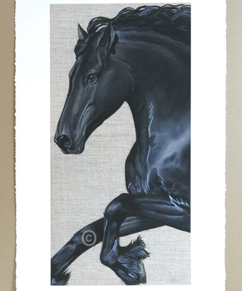 limitd edition print of a friesian horse painting by artist susan taylor