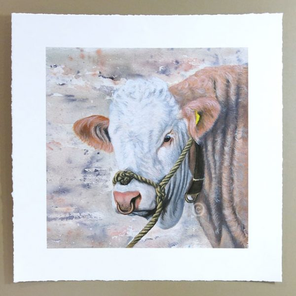 signed limited edition print of simmental bull watercolour