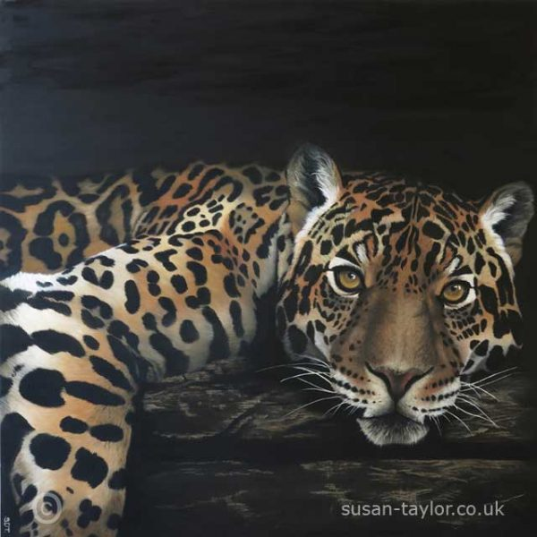 portrait of a jaguar, oil on canvas 1 mtere square by artist Susan Taylor