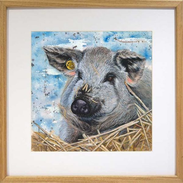 watercolour portrait of a magalistsa pig in oak frame