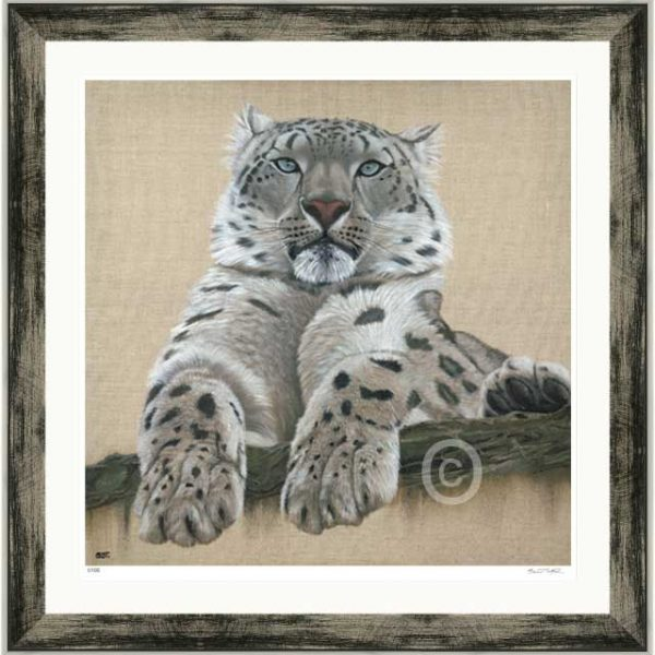 signed limited edition print of a snow leopard set in black silver frame