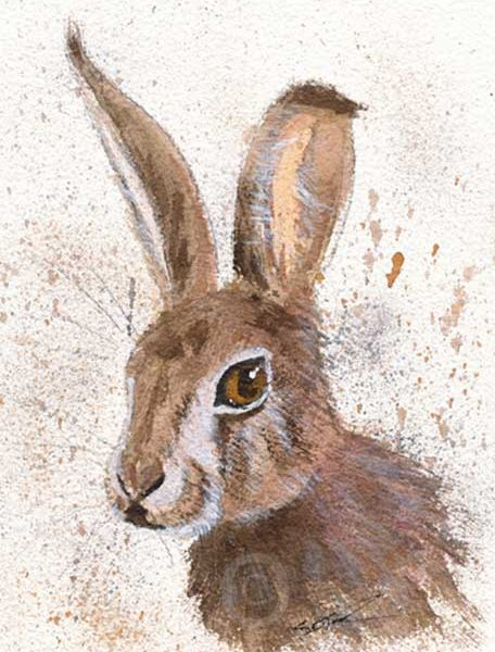 watercolour painting of a leveret or hare - art