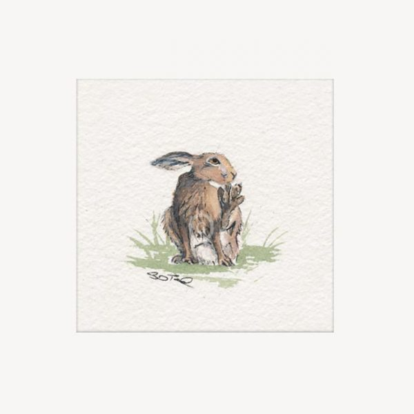 grooming hare signed limited edition mounted print 22cm sq
