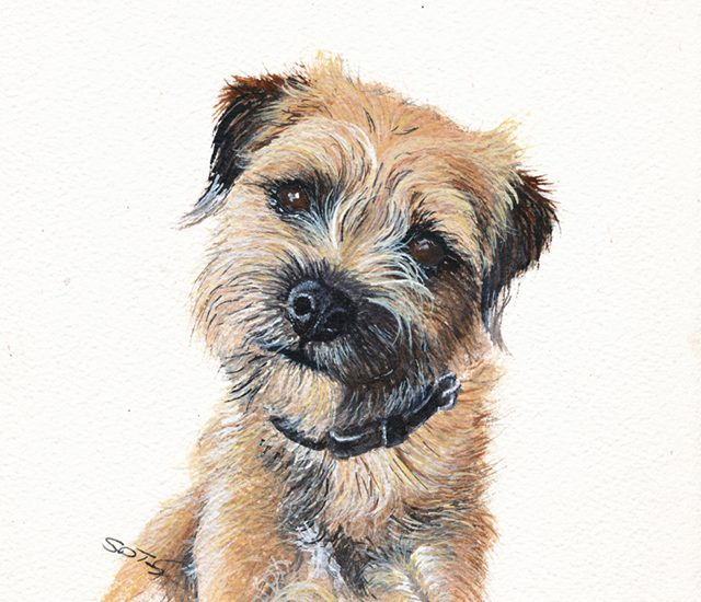 Portrait of Rosie The Border Terrier