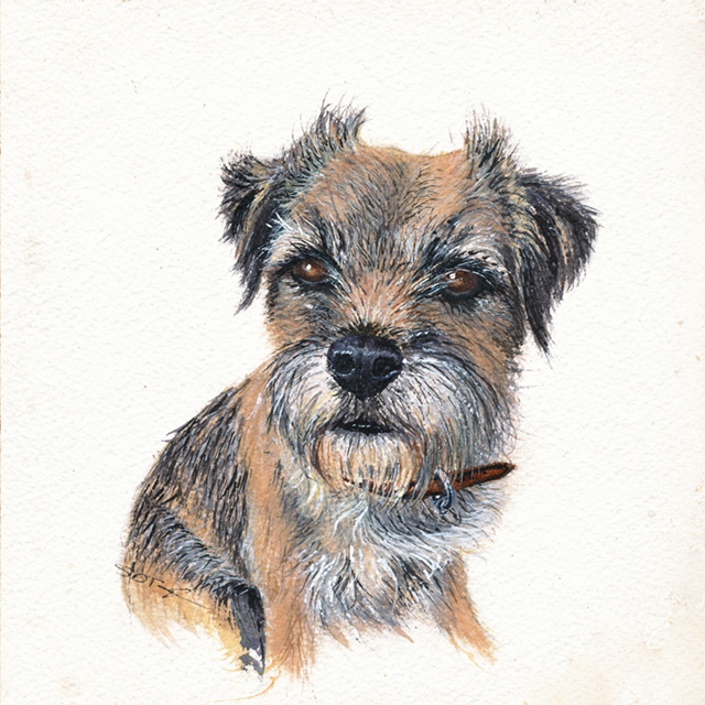 Watercolour Portrait of a border Terrier called Rosie