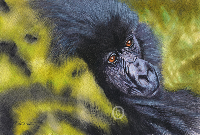 mountain gorilla watercolor painting