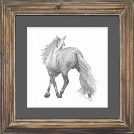 horse, andalusian, stallion.watercolour. watercolor,equine, framed art, drawing, soluble pencil, art, original art, framed art, antique frame, horses, dressage,