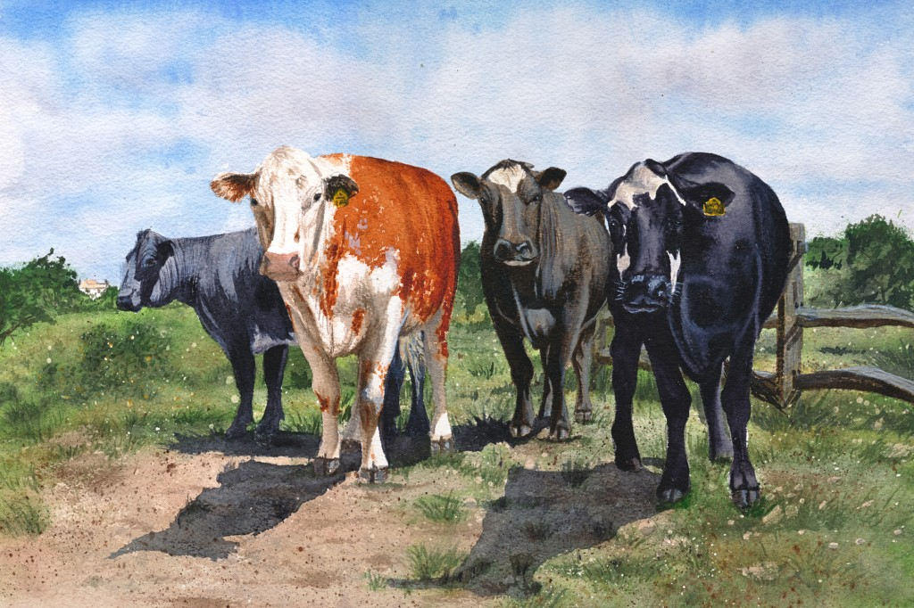 Water colour painting of 4 curious cows in a field
