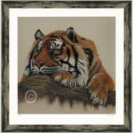 Portrait of a sumatran tiger for sale as a Limited edition signed art print framed in silver/black frame to hang on the wall