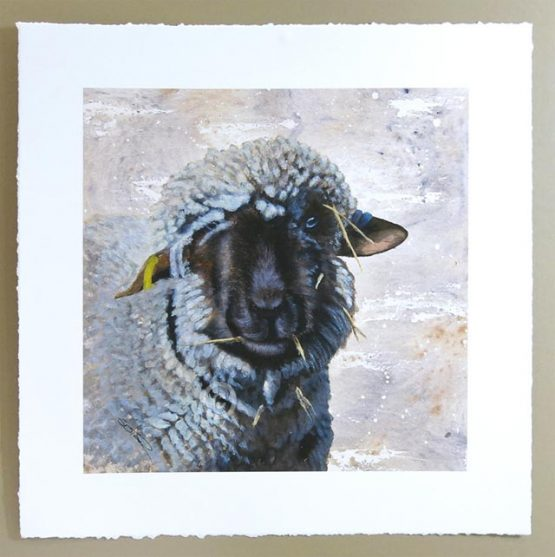 limited edtion signed print of oxford down sheep watercolor