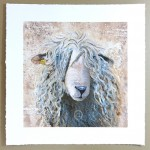 signed limited edition print of Devon and Cornwall Longwool sheep