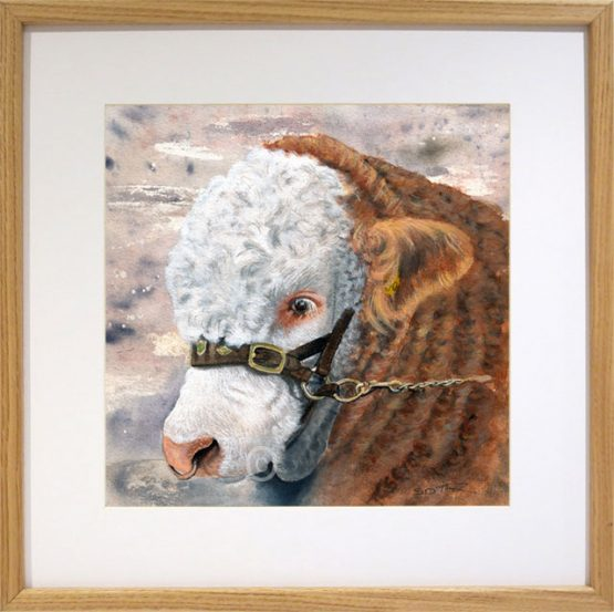 simmental bull art watecolour painting framed