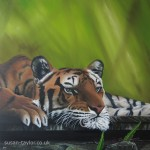 portrit of a tiger lazing in the jungle, oil on canvas 1 mtere square by artist Susan Taylor
