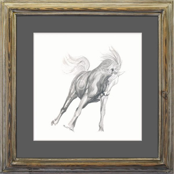 Andalusian Mare Drawing