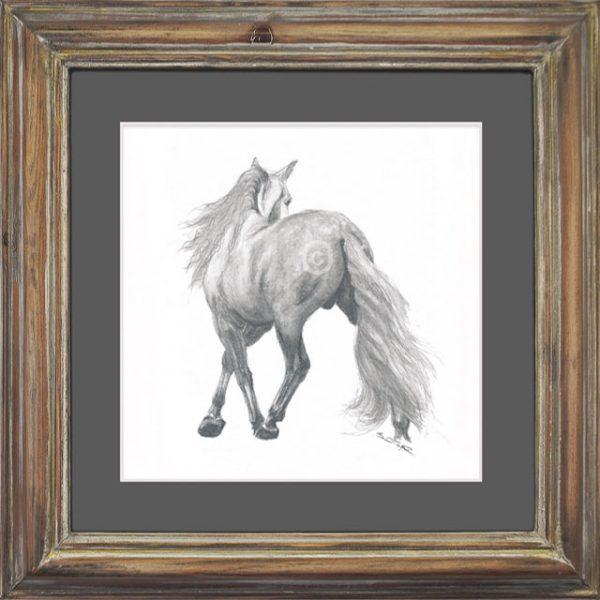 Andalusian Stallion Drawing